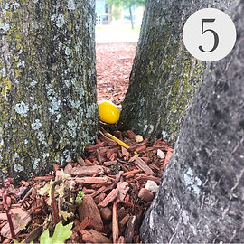 Easter Egg Hunt #5.jpg