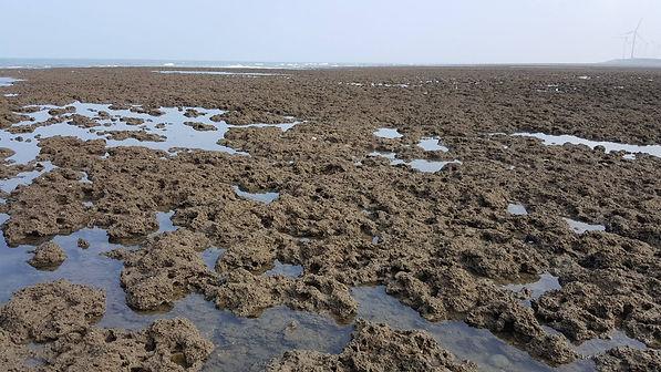 2- 桃園藻礁 (資料來源:珍愛桃園藻礁FB).jpg