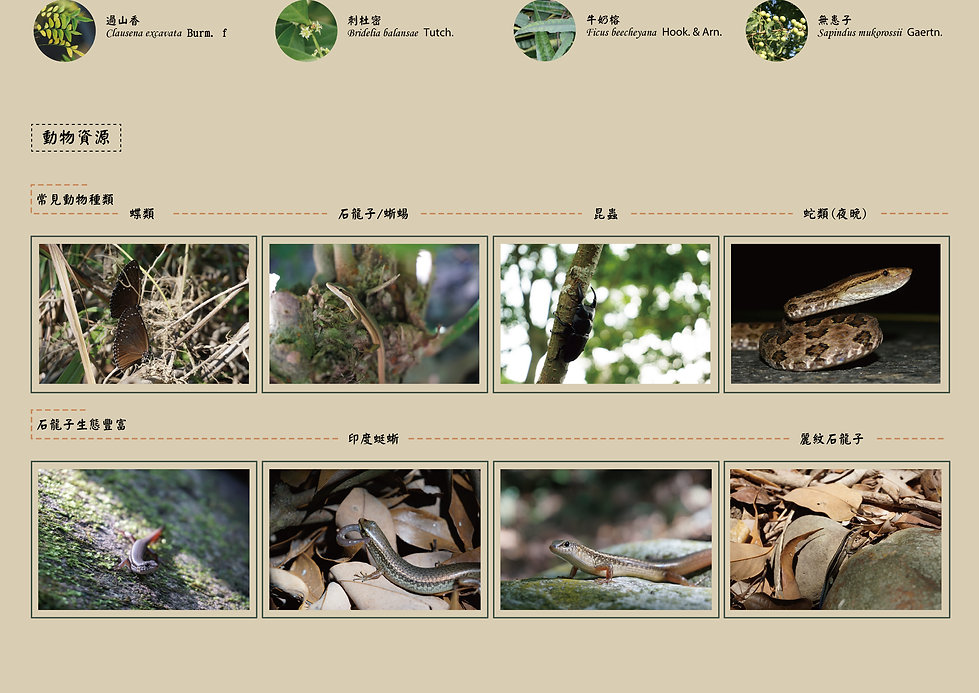 Learning-With-Nature-06.jpg