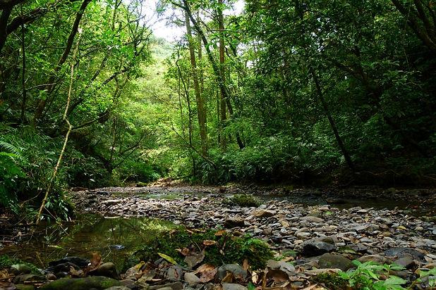向島嶼自然學習生命地景(一):自然溪流與自然森林 @坪溪古道.jpg
