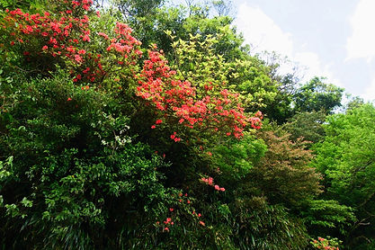 向島嶼自然學習生命地景(二):自然森林邊緣植物多樣性競生的表現@百拉卡公路.jp