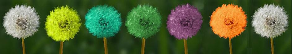 dandelion 4 BIS.jpeg