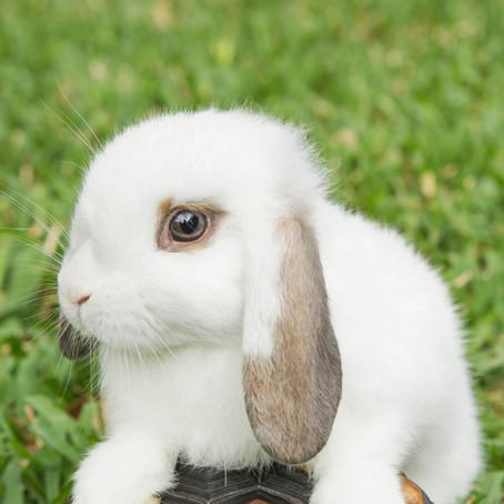 """Sneezing Rabbits"" by Tex Thomas"