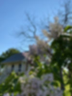 GuestHouse Lilacs 2020.jpg