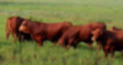 Beef-150.jpg