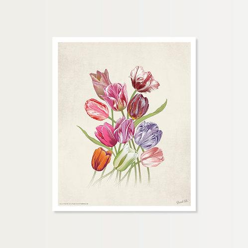 Eleven Tulips Art Print 14x17