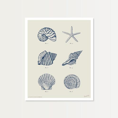 Shell Specimens in Navy Art Print 14x17