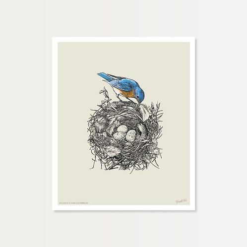 Bluebird's Nest Art Print 14x17