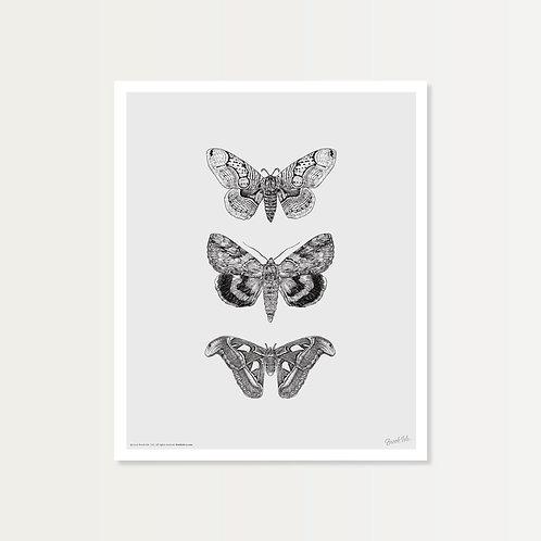 Papillons de Nuit Art Print 14x17