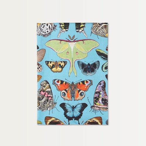 Papillon Specimen on Blue Cotton Towel