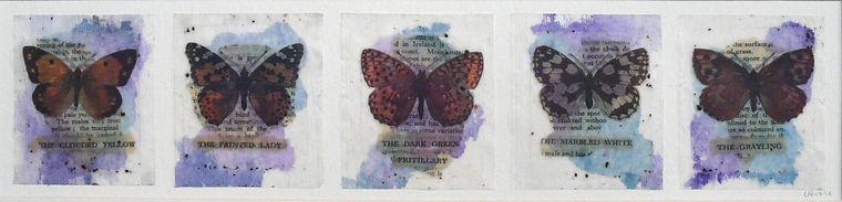 Butterflies ' Specimen' Case