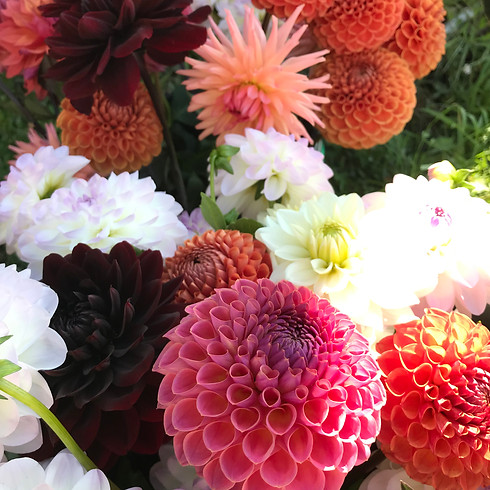 Flower Club - All about the Dahlias!