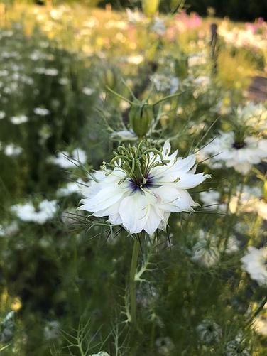 For florists.jpg
