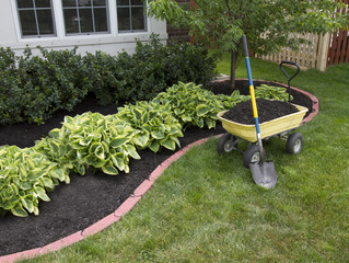 With the heat of high summer approaching, it's a good idea to top up your mulch.