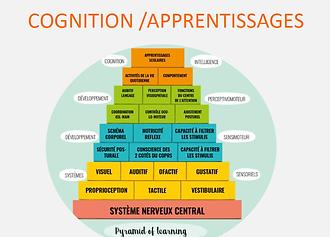 cognition et apprentissage.png