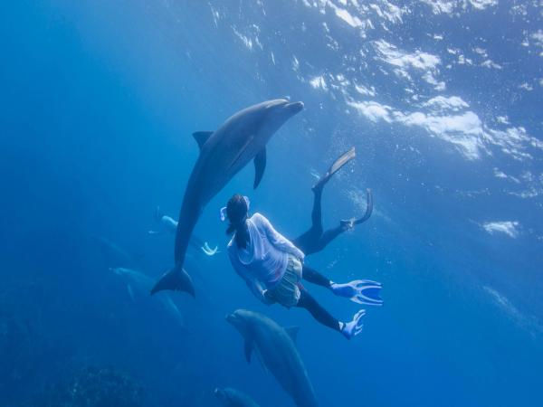 Nage avec dauphins + excursion