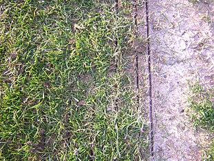 Entretien surface engazonn e for Refection pelouse prix