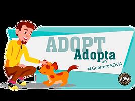 Adopt, Adopta, adopta un rescatado, adopt a rescued dog, adopt a rescued cat, adopta un perro, adopta un gato, adopta un perro rescatado, adopta un gato rescatado