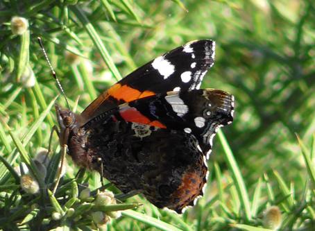 Wildlife Sightings at Dungeness RSPB NNR 09/10/2018