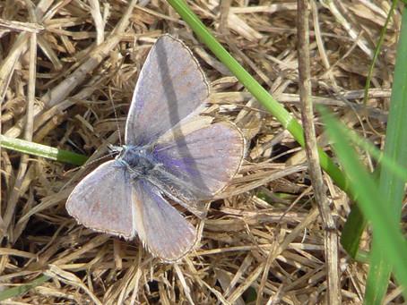 Pulborough Brooks RSPB Nature Reserve 23/08/2018 13:15 – 17:05