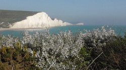 Blackthorn & Seven Sisters