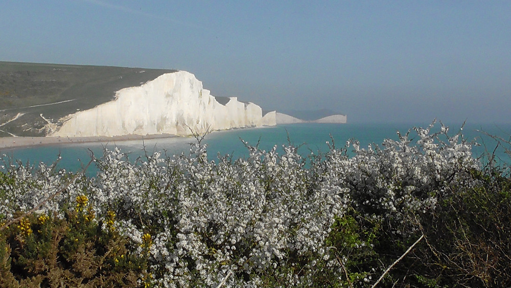 Seven Sisters and Blackthorn, East Sussex