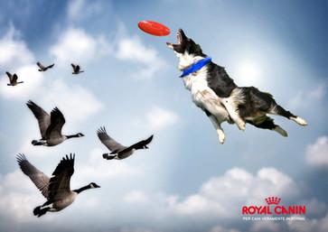 Royal Canin visual concept