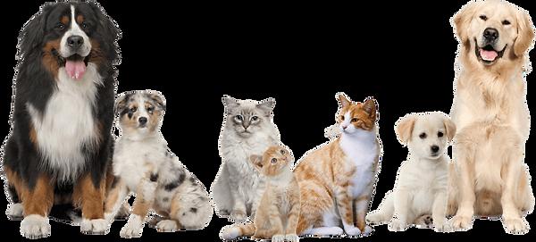Bannja Shop CSRA Pets