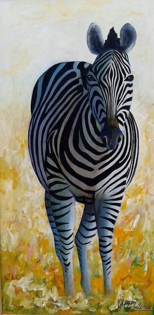 Zebra Mare