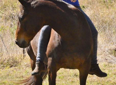 Considerate Horsemanship