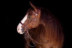 Bitless Bridle Deluxe in brown.