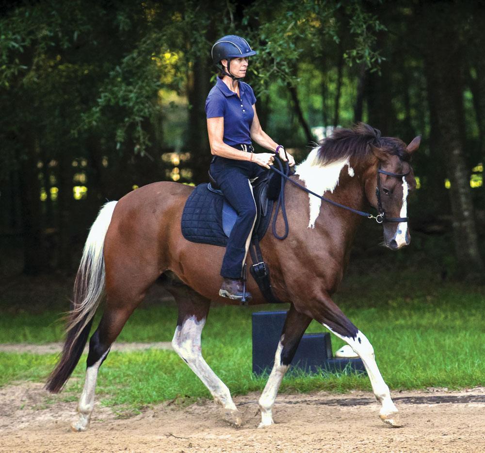 Bitless Dressage Horse
