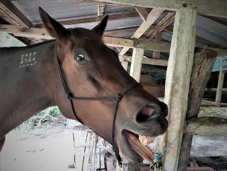 Horses That Bite