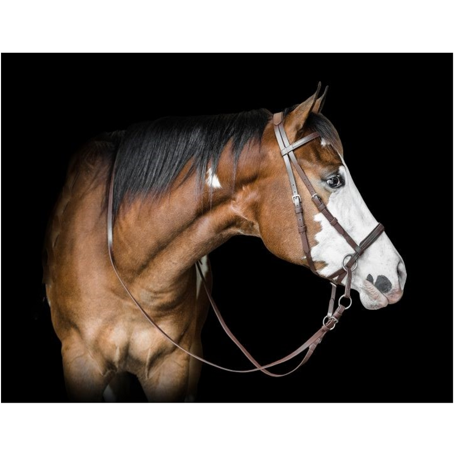 beta bitless bridle and reins