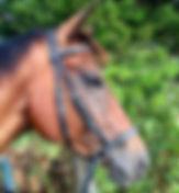 Toris Horse.jpg