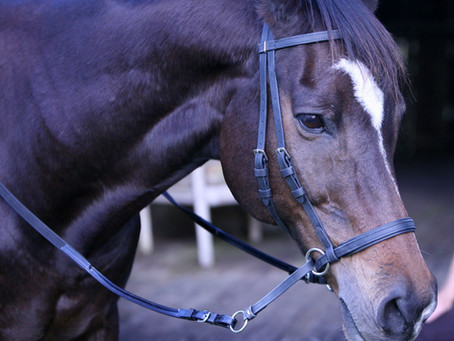 Which Bitless Bridle Should I Use?