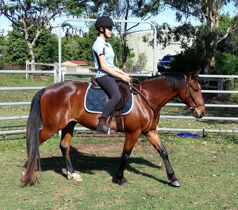 Happy Horses Bitless Riding Lesson