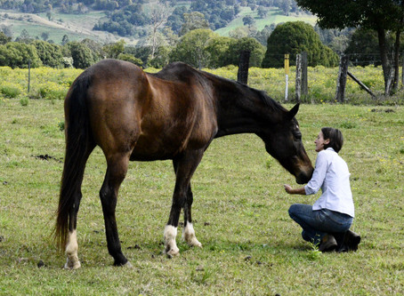 Finding the Present Moment with Horses