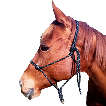 halter with B square small.png