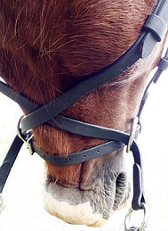 Bridle with Cross Straps View white back