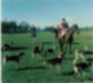 horse pics 2 002.jpg