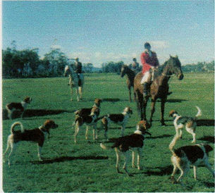 Horse hunting with hounds