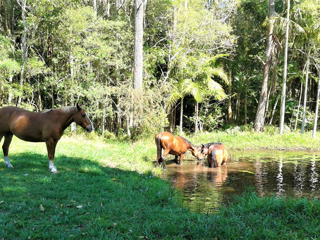 Environmental Enrichment for Horses