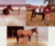 horses 4 001.jpg