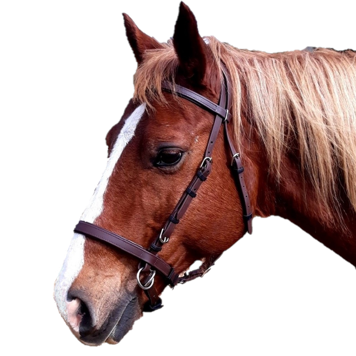 Side-Pull Bitless Bridle