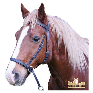Dr Cooks bitless bridle on a chestnut brumby
