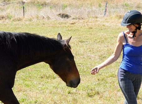 Interacting with Horses Through the Heart