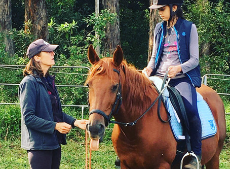 Training the Rider to Train the Horse