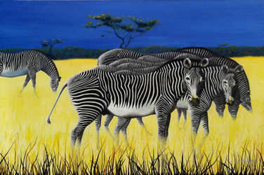 Zambian Zebras