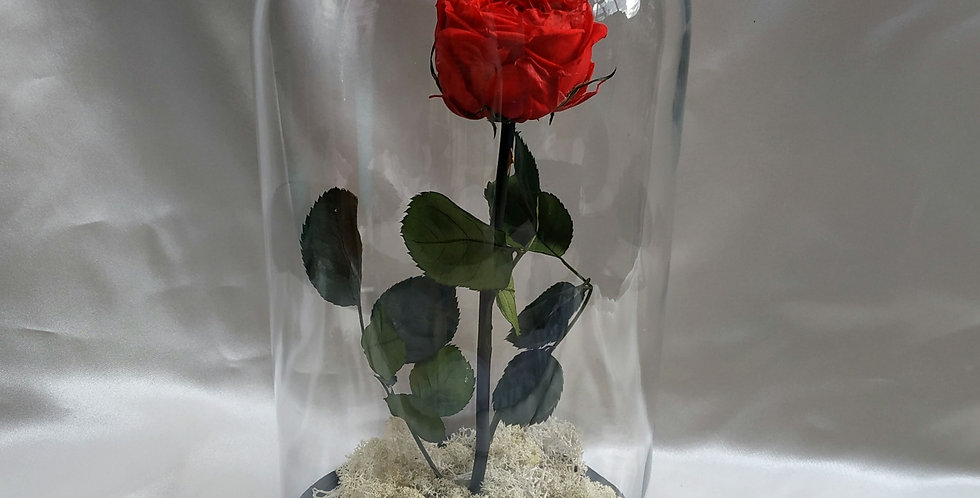 Τριαντάφυλλο forever rose σε γυάλα.